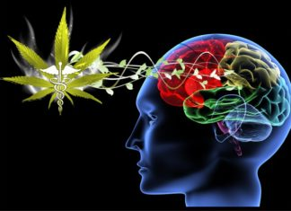 Medical Marijuana Benefits Extend To Treating Concussions